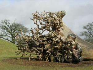 National Botanic Garden Wales - fallen tree - March 2018